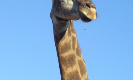 Danmark har mange dejlige zoologiske haver